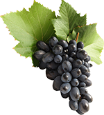 grapes-cluster